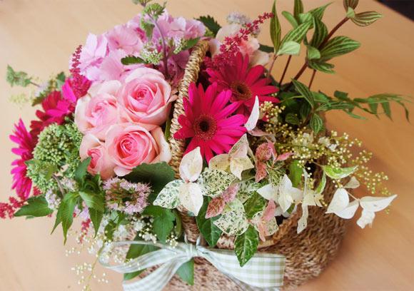 hoa deo nhat