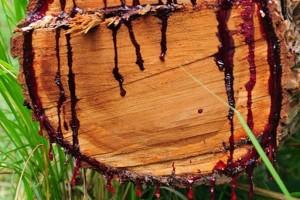 gỗ máu 2